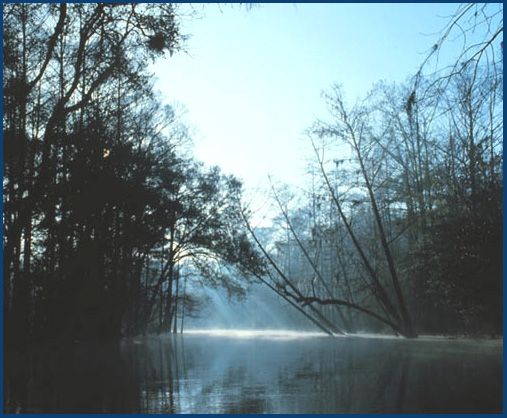 The Withlacoochee River - Gateway to the Nature Coast